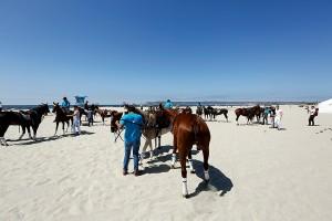 Horses-on-beach